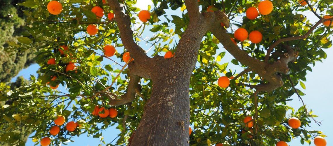oranges-1117644_1280